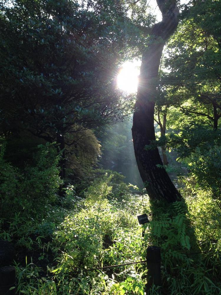 木と光とわたしの関係