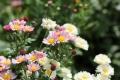 9月の花22