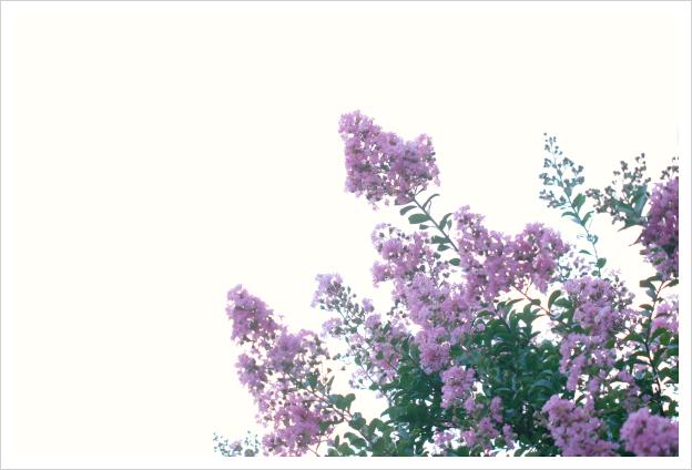 2014-08-21-01.jpg
