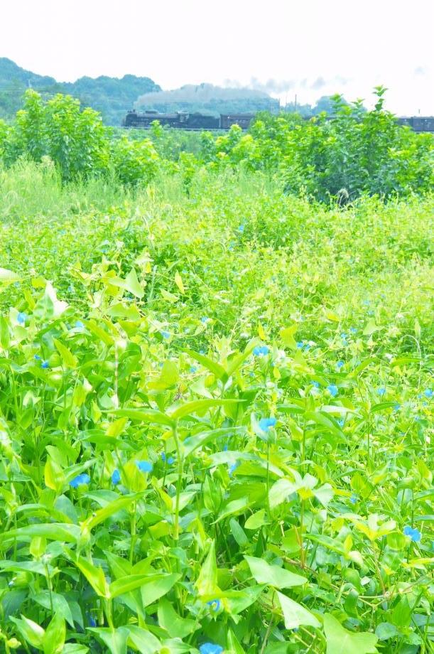 140824tsuyukusa016_ch-.jpg