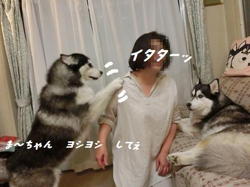 CIMG1585yo.jpg