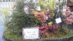 生垣コーナーB