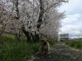 s-CIMG4696.jpg