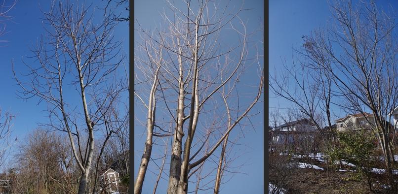 2014-02-19 2014-02-19 002 009-horz