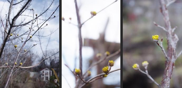 2014-03-02 2014-03-02 005 096-horz-vert