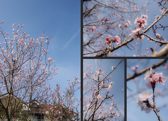 2014-03-18 2014-03-18 005 121-horz
