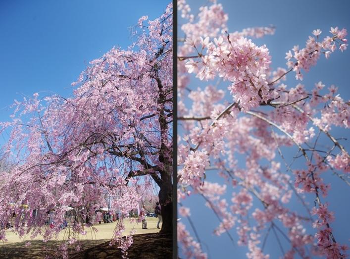 2014-04-05 2014-04-05 001 044-horz-horz