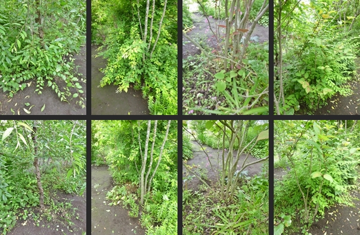 2014-06-11 2014-06-11 001 018-horz-vert