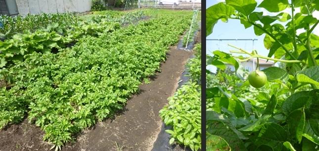 2014-06-15 2014-06-15 001 004-horz-vert