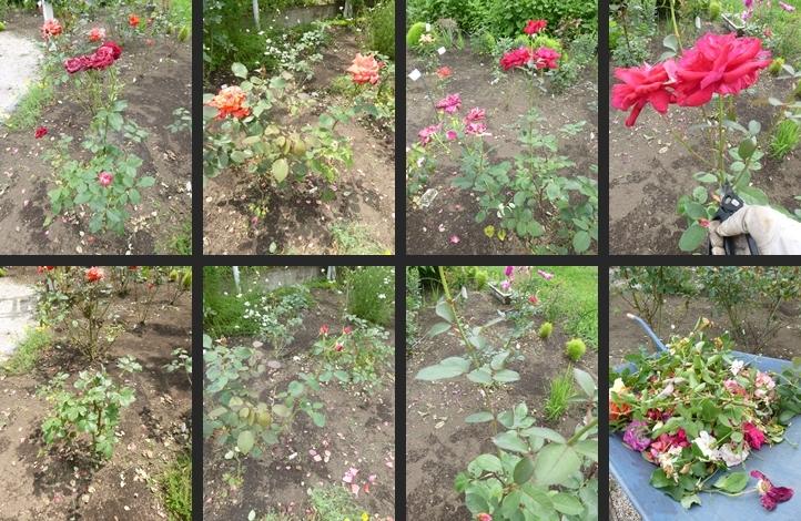 2014-06-25 2014-06-25 001 024-horz-vert
