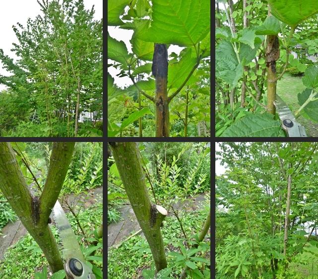 2014-07-08 2014-07-08 003 022-horz-vert