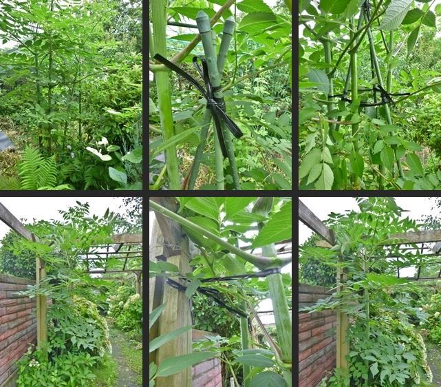 2014-07-08 2014-07-08 003 002-horz-vert