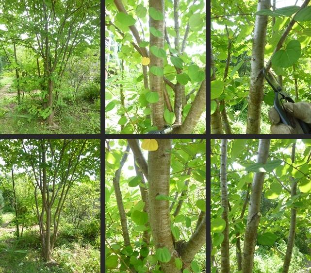 2014-07-16 2014-07-16 001 060-horz-vert