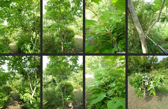 2014-07-16 2014-07-16 001 115-horz-vert