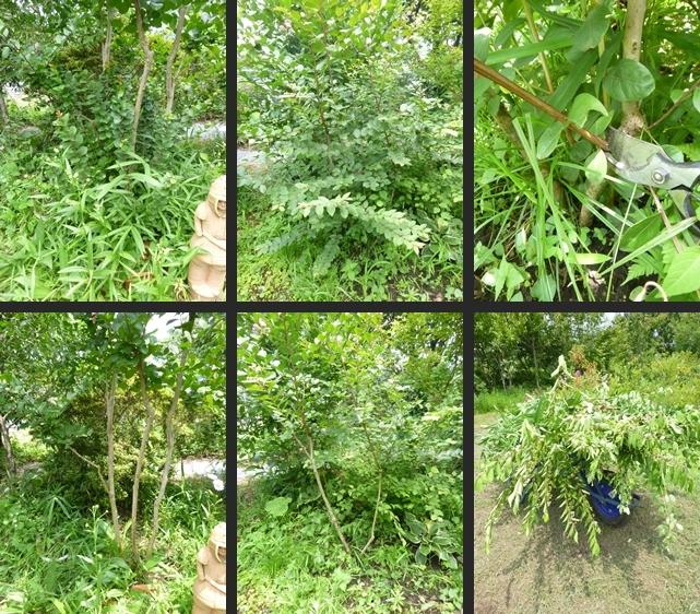 2014-07-16 2014-07-16 001 047-horz-vert
