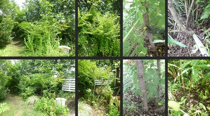 2014-07-16 2014-07-16 001 006-horz-vert