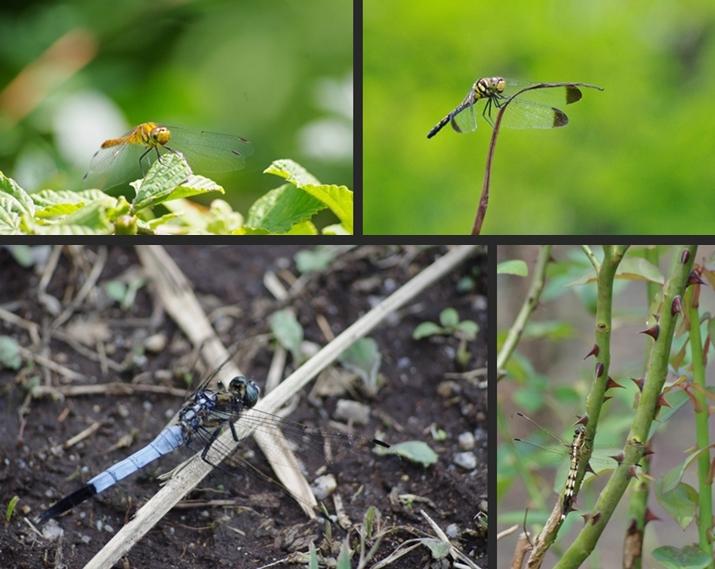 2014-07-20 2014-07-20 001 042-horz-vert