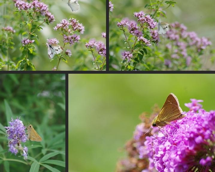 2014-07-20 2014-07-20 001 094-horz-vert