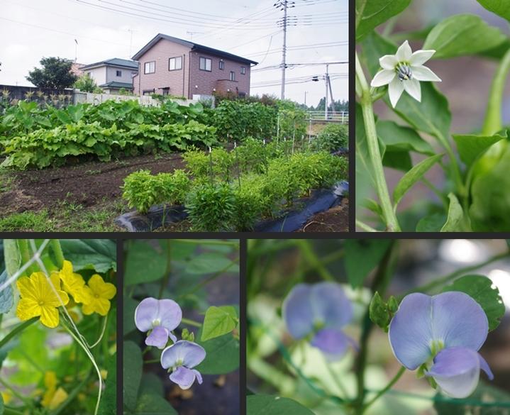 2014-07-22 2014-07-22 001 001-horz-vert