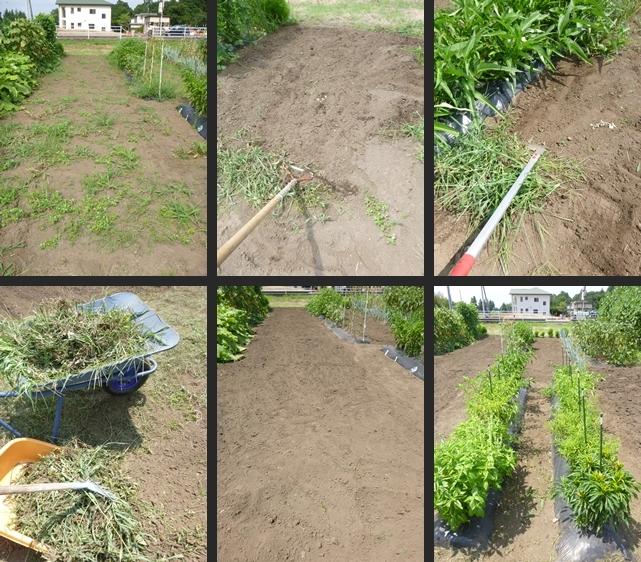 2014-08-07 2014-08-07 001 015-horz-vert