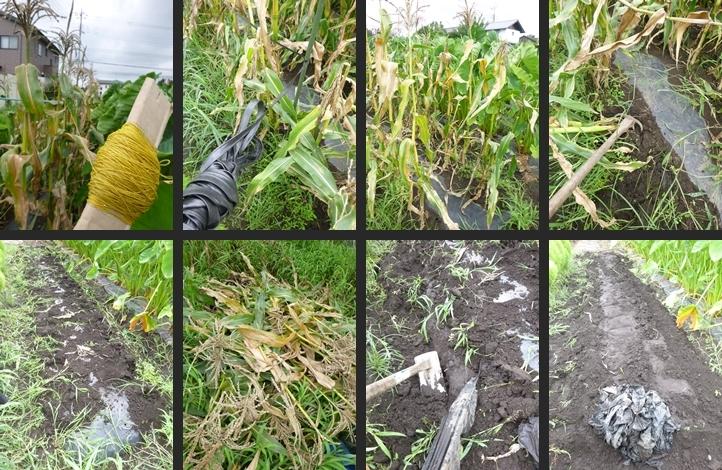 2014-08-11 2014-08-11 001 016-horz-vert