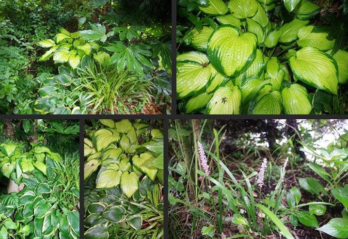 2014-08-12 2014-08-12 001 015-horz-vert