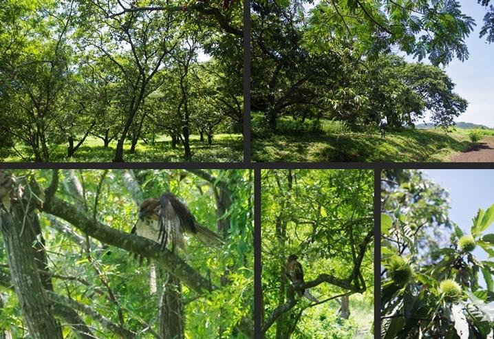 2014-08-12 2014-08-12 003 039-horz-vert