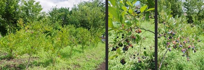 2014-08-17 2014-08-17 002 004-horz-horz