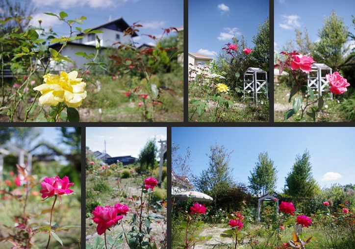IMGP1422-horz-vert.jpg