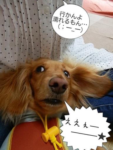 雛ちゃん、ブログ3周年♪
