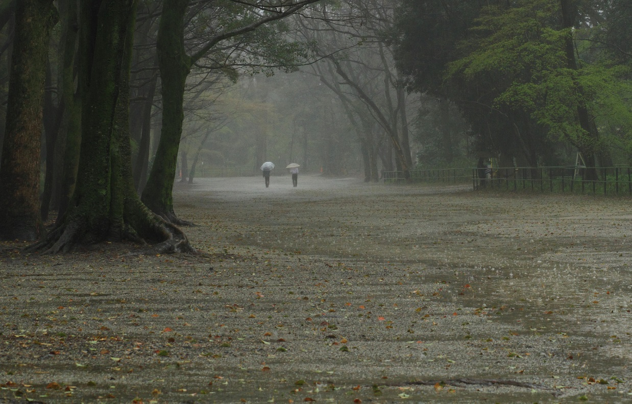 ブログ雨糺すの森
