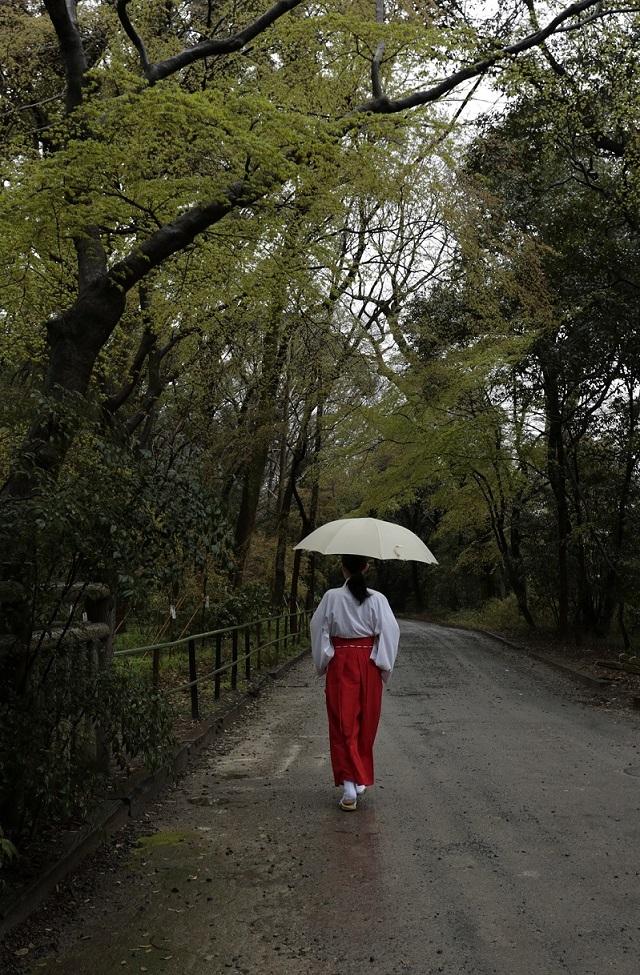 ブログ雨糺すの森巫女