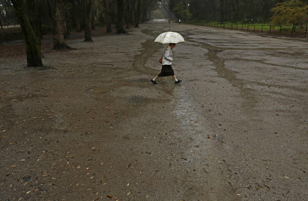 ブログ雨糺すの森4