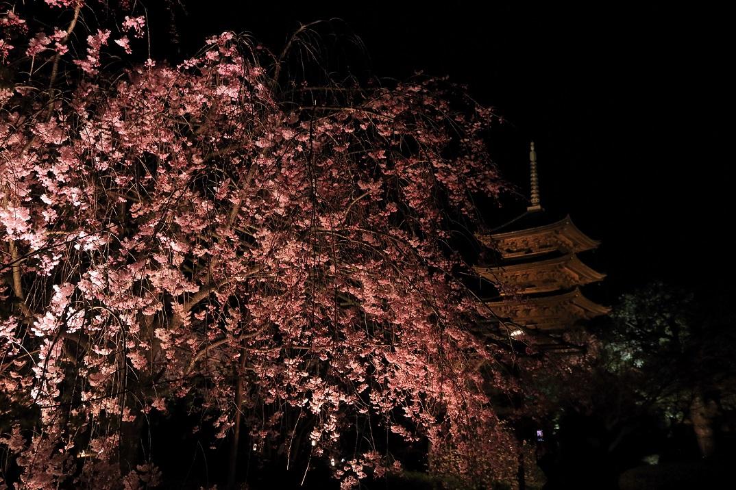 ブログ東寺ライトアップ1