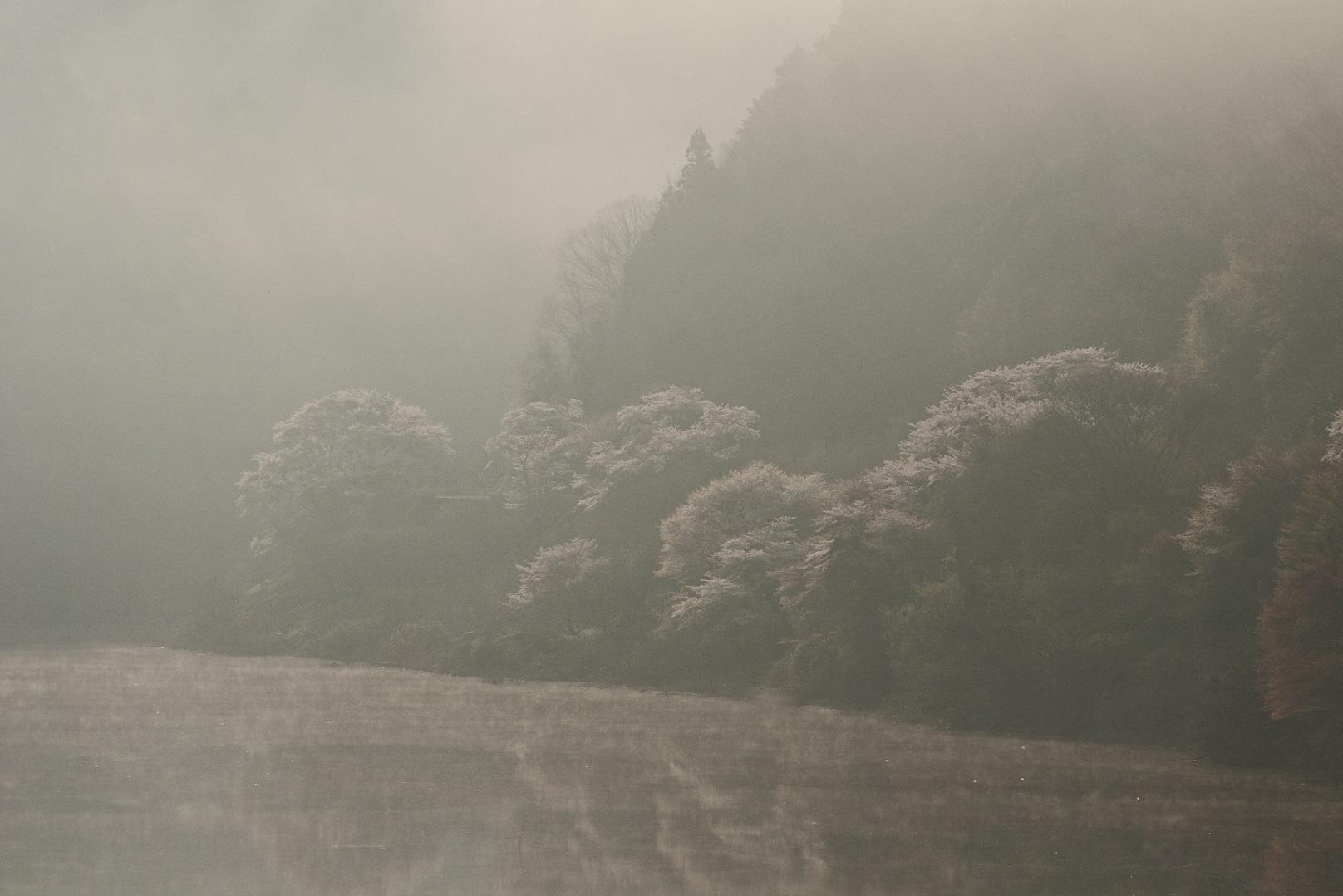ブログ月ヶ瀬桜3 - コピー
