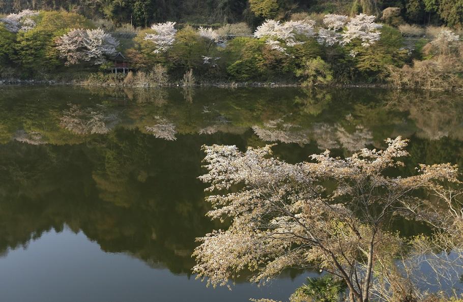 ブログ月ヶ瀬湖面8