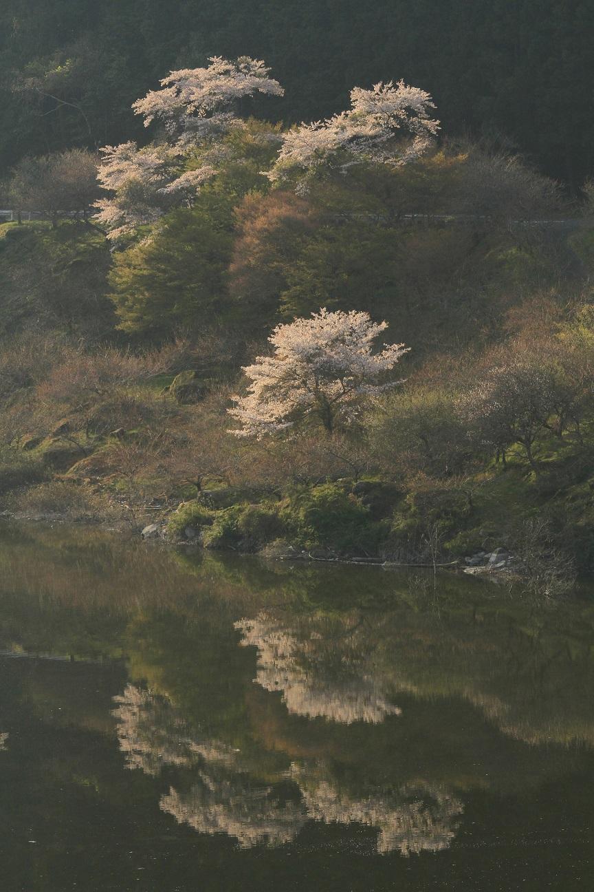 ブログ月ヶ瀬湖面2_edited-1