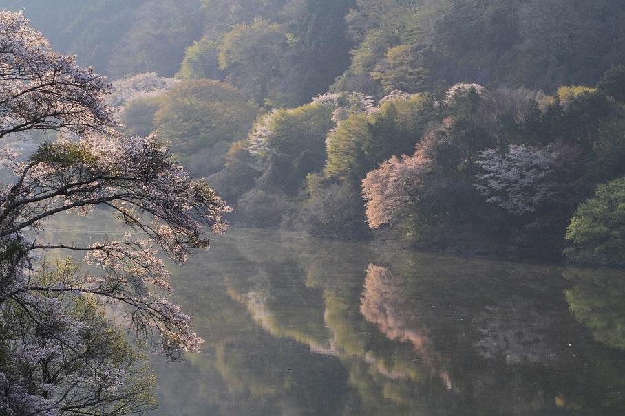 ブログ月ヶ瀬対岸4