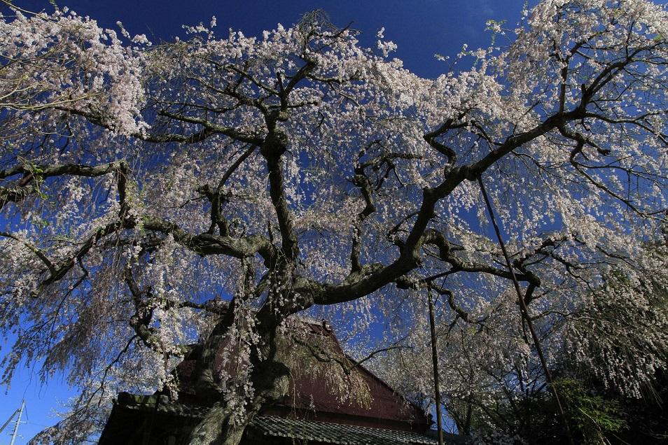 ブログ西山寺1