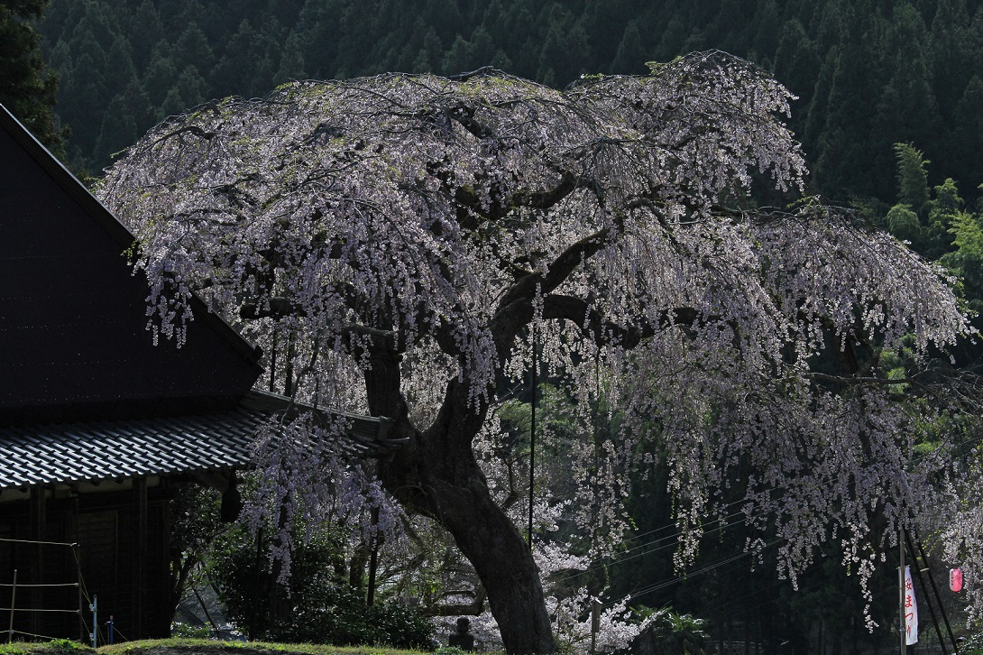 ブログ西山寺2