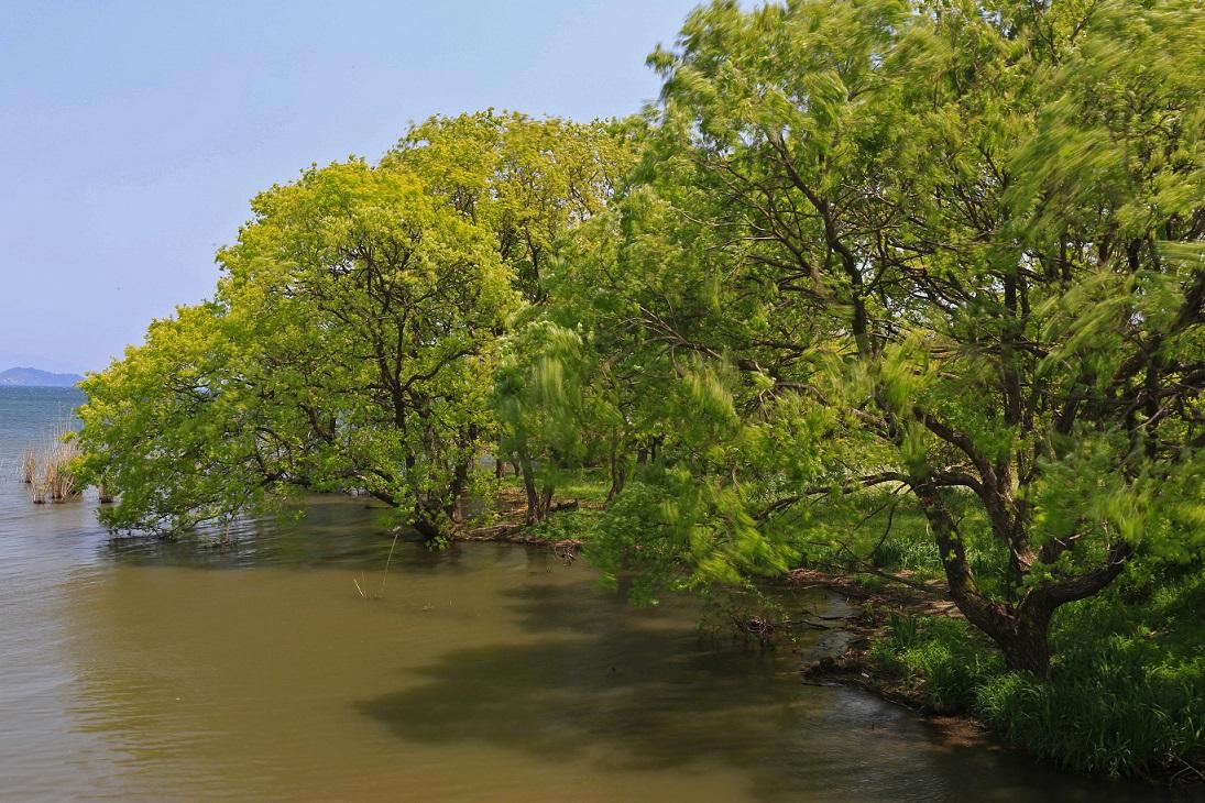 ブログ琵琶湖1