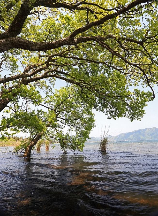 ブログ琵琶湖2