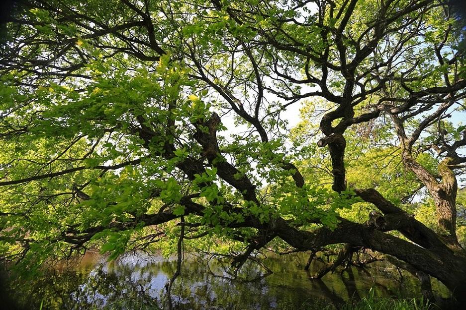ブログ琵琶湖3