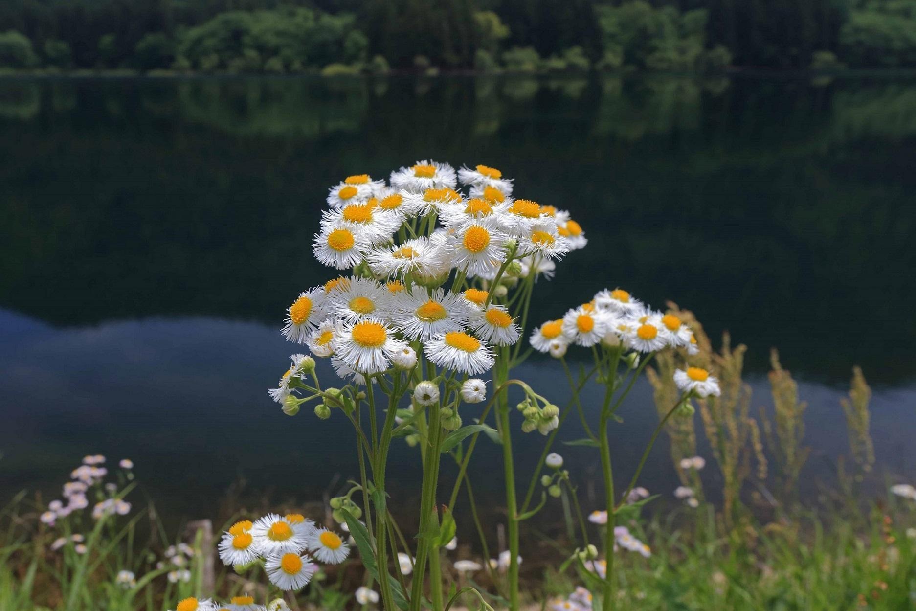 ブログ北竜湖3