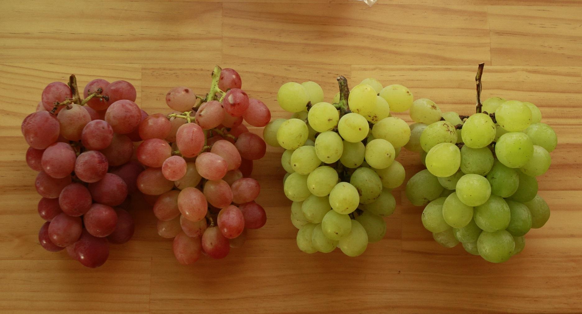 大府ブドウ全種4