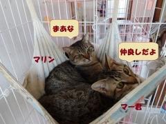マリン&まーくん3