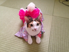 みーちゃん浴衣2