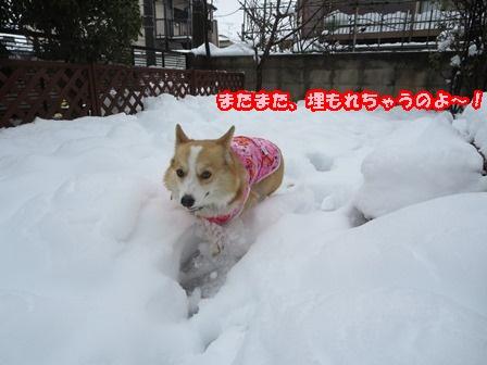 0215雪ね~