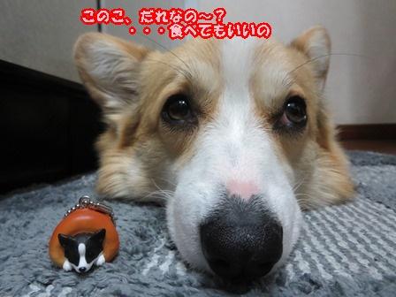0319犬パン5