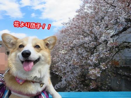 0413ぶたひめ13